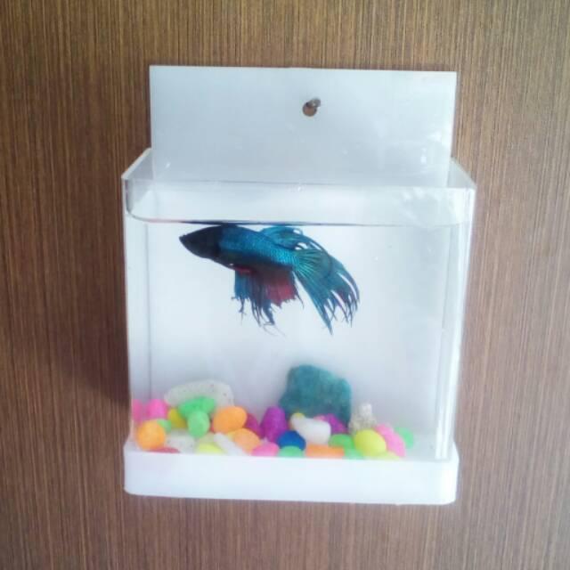Aquarium Mini Ikan Cupang Gantung Shopee Indonesia