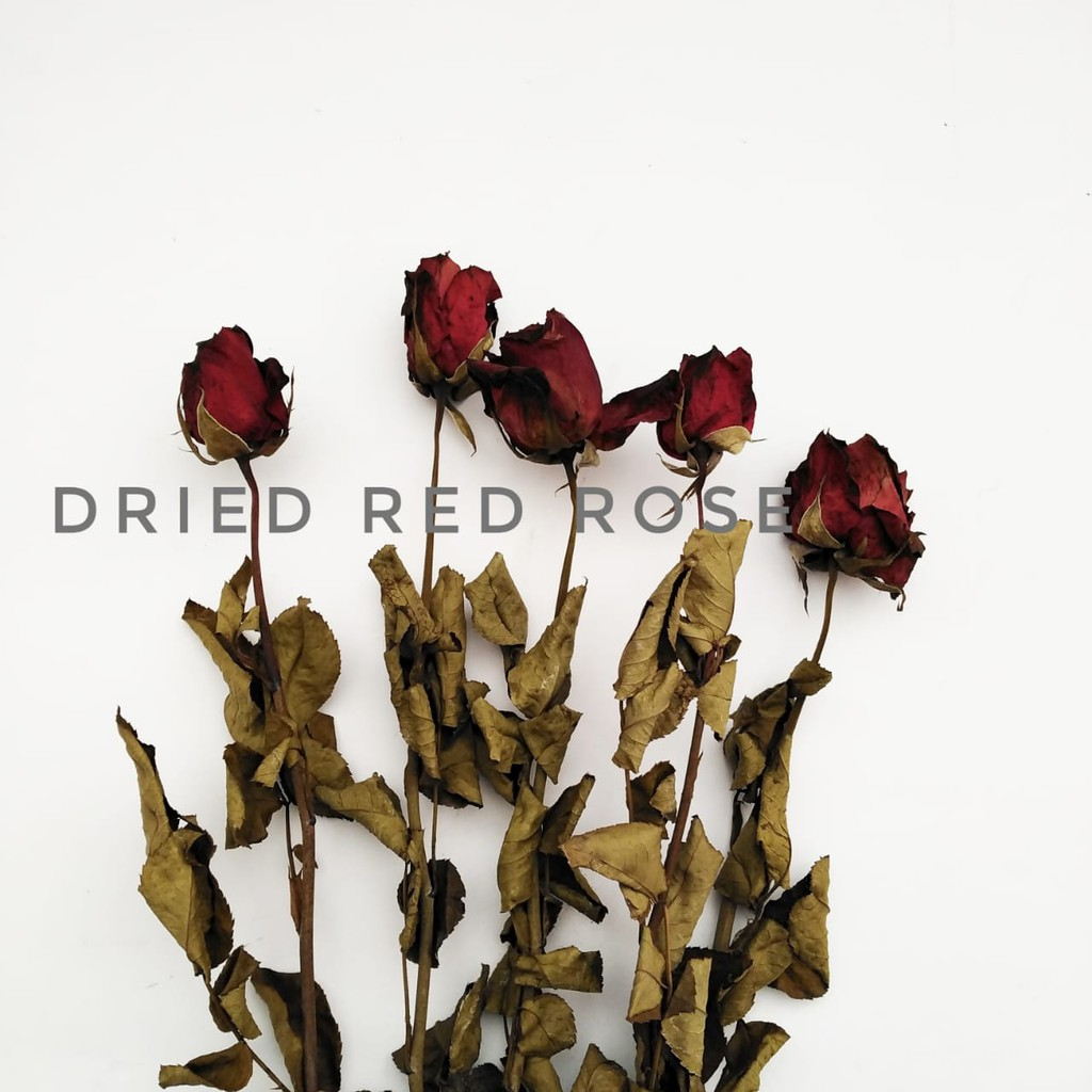5 Tangkai Bunga Mawar Kering Dried Rose Shopee Indonesia