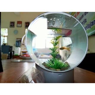 Aquarium Mini Aquarium Bulat Aquarium Mini Murah Aquarium Kecil Aquarium Cupang Shopee Indonesia