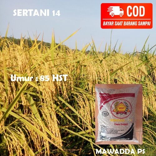Benih Padi Sertani 14 Bibit padi unggul (5kg)