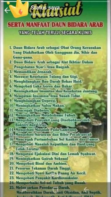 Pohon Bidara Arab Asli Berduri Shopee Indonesia