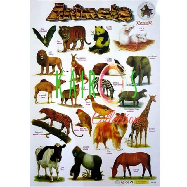 Poster Animal Binatang Shopee Indonesia