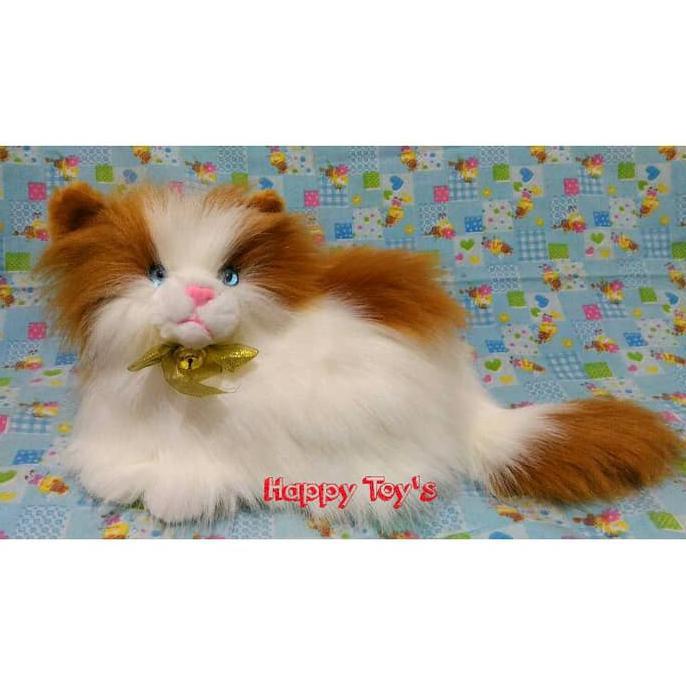 Boneka Kucing Anggora Lucu Shopee Indonesia