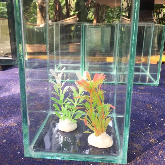 Aquarium Mini Aquarium Kecil Paket Aquarium Mini Paket Aquarium Kecil Soliter Ikan Cupang Shopee Indonesia