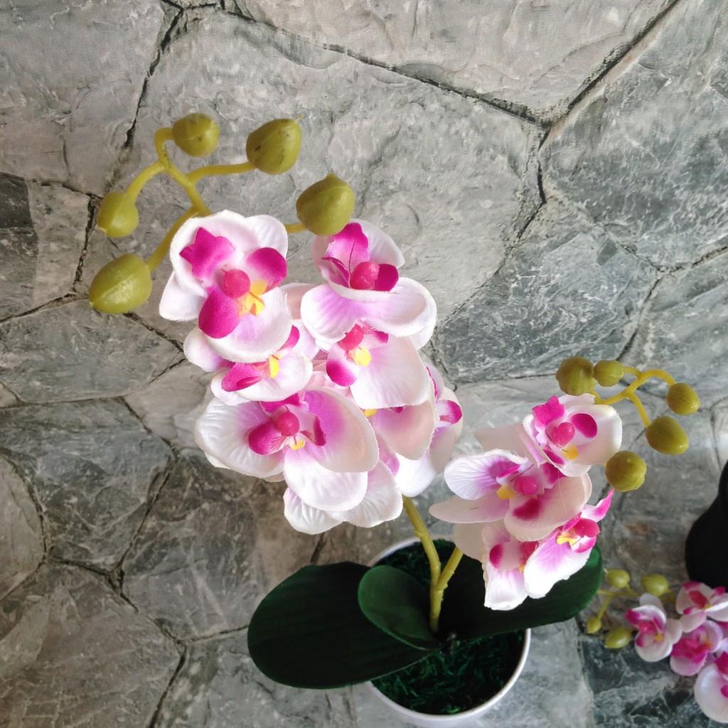 Set Pot Bunga Anggrek Artificial Pajangan Hiasan Meja Dekorasi Rumah Shopee Indonesia