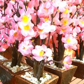 bunga meihwa pot bunga imlek hiasan bunga sakura dekorasi