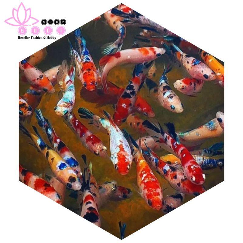 COD || anakan ikan cupang multi color || blue rim Avatar gordon vampir gold halfmoon aduan giant