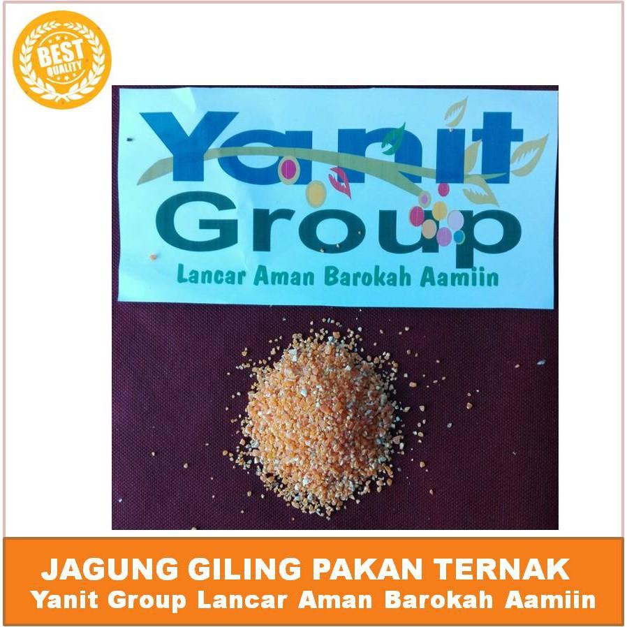 Wiyadistore Pakan Ayam Burung Merpati Tekukur Puter Jagung Giling Kyojin Raksasa 1000gr Pecah Shopee Indonesia