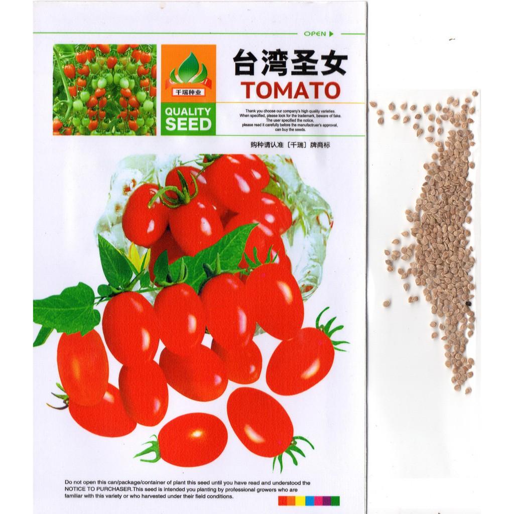 100 Biji Benih Tomat Cherry Kuning S0057 Shopee Indonesia Labu Ipb Lk1