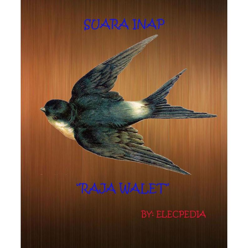 Suara Walet Inap Raja Walet Suara Walet Suara Burung Walet Shopee Indonesia