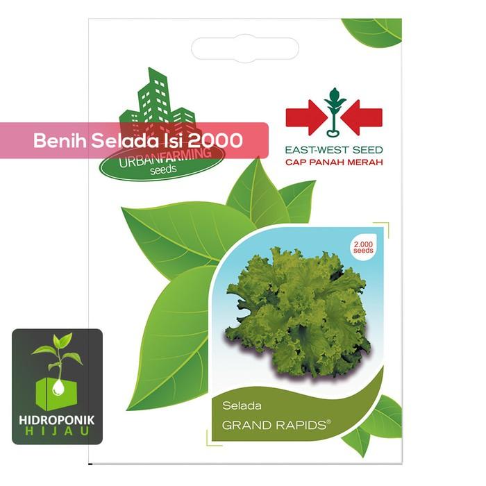 Bibit Benih Biji Panah Merah Selada Hijau Grand Rapids - 15 gram | Shopee Indonesia