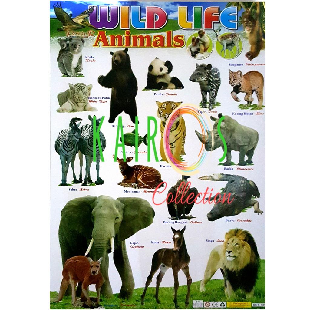 540 Koleksi Sketsa Gambar Binatang Untuk Anak Sd Gratis Terbaik