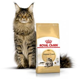 ROYAL CANIN MAINE COON ADULT 400gr-makanan kering kucing dewasa | Shopee Indonesia