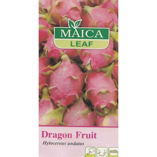 Maica Leaf Benih Dragon Fruit (Buah Naga) ...