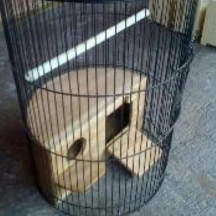 Glodok Ternak Lovebird Glodokan Oval Sangkar Lovebird Glodok Kayu Shopee Indonesia