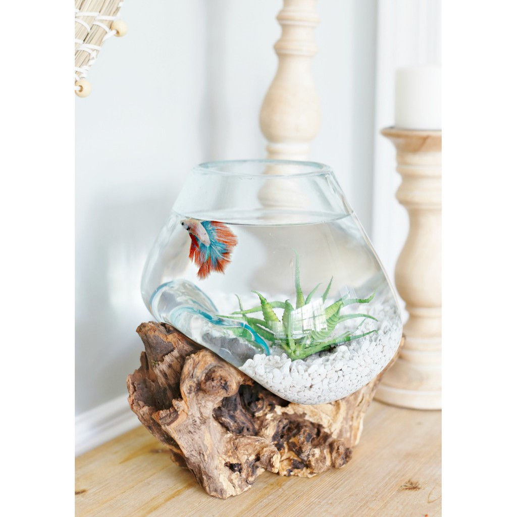 Akuarium Ikan Cupang Size L Aquascape Aquarium Unik Glasswood Potkacatiup Shopee Indonesia