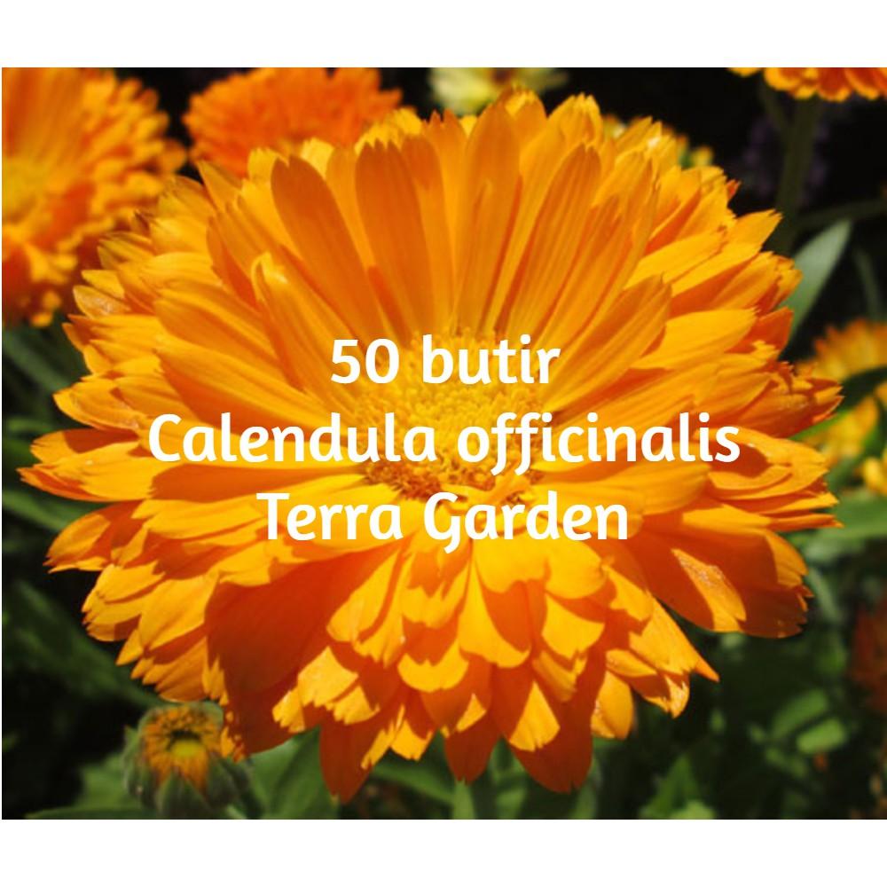 Biji Benih Bunga Calendula Officinalis Kalendula 50 Seeds Shopee Indonesia