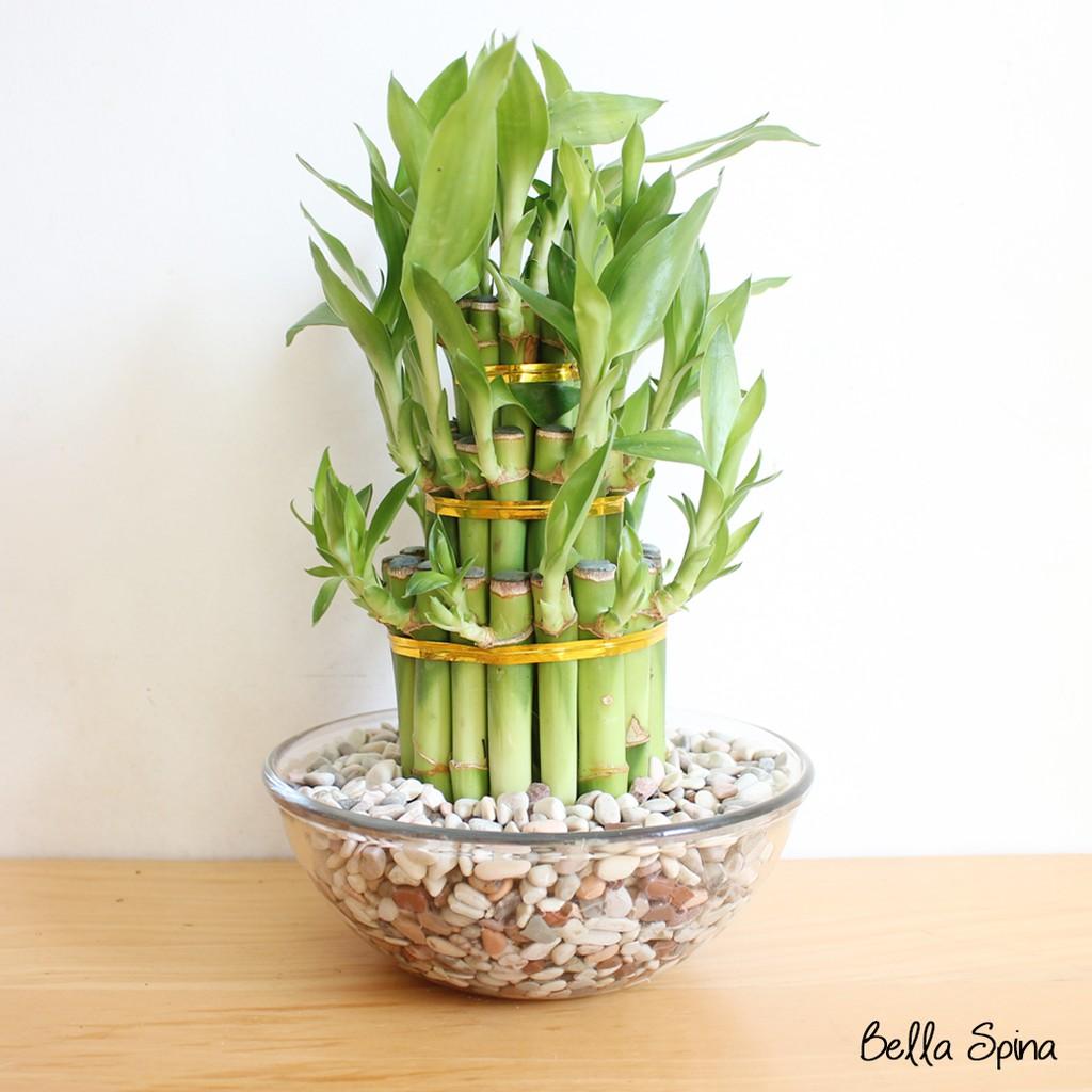 Vas Tanaman Bambu Hoki Rejeki Batu Hias Multicolor Hb 04 Shopee Indonesia