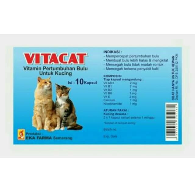 6600 Koleksi Gambar Pertumbuhan Hewan Kucing Gratis Terbaru