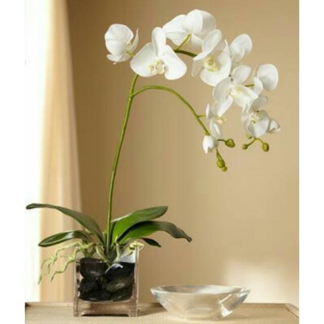 bunga anggrek bulan latex import  0f30560cdd