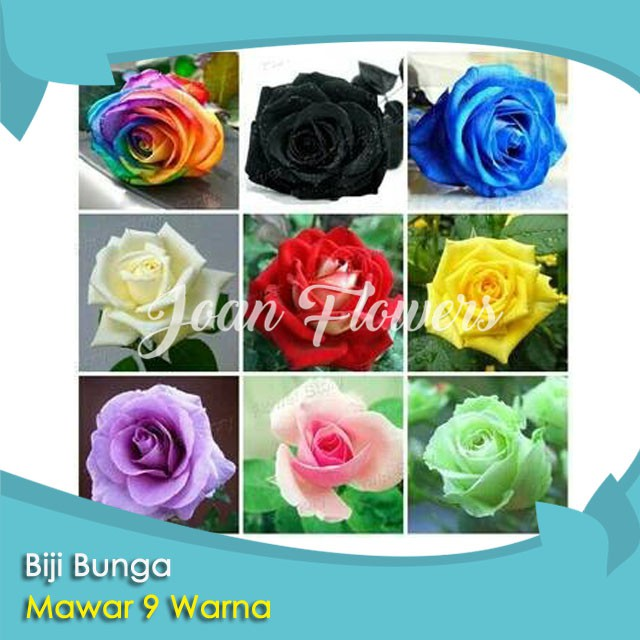 Bibit Tanaman Bunga Mawar 9 Warna Benih Bibit Tanaman Hias Untuk Dekorasi Rumah Shopee Indonesia
