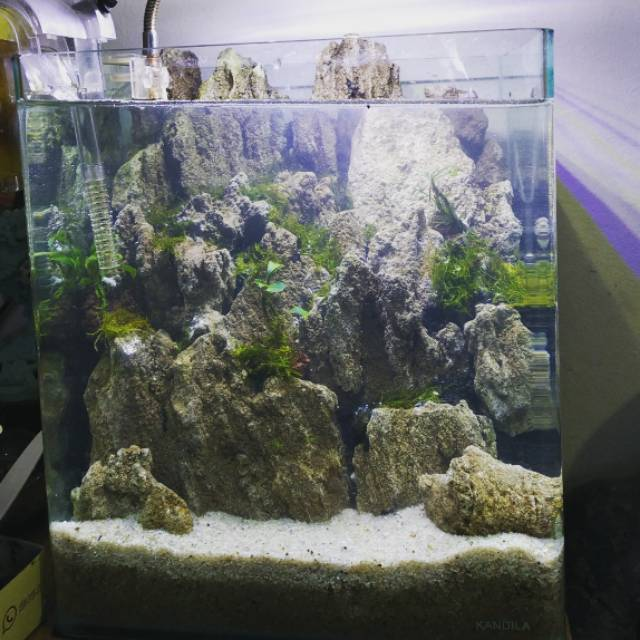 Jasa Design Aquascape Ukuran 30 Cm Shopee Indonesia