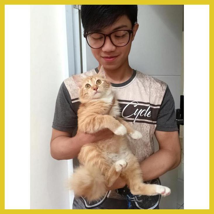Obat Vitamin Bulu Kucing Ampuh Susukucing Shopee Indonesia
