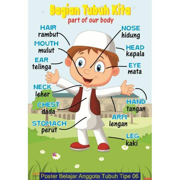 Poster Belajar Anggota Tubuh Kegiatan 2 Shopee Indonesia