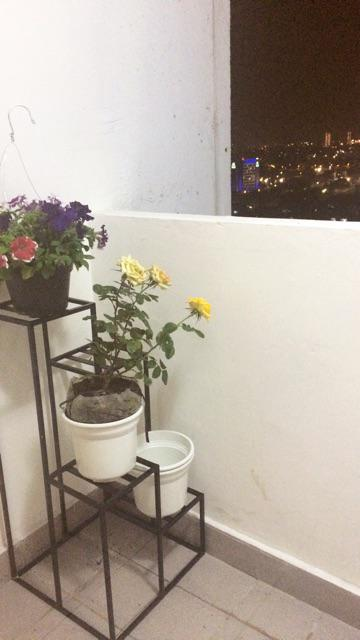 Suka banget dengan rak pot bunganya, sesuai dengan yg di foto. Penjual respon cepat, dan packingnya luar biasa. Dilapis kardus, dilakban, terlindungi setiap ...